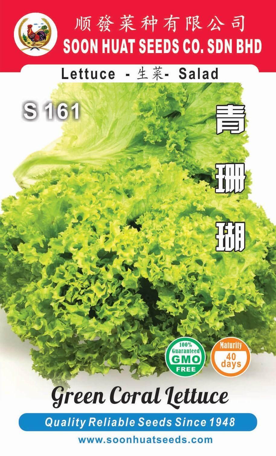 SoonHuatSeeds benih Salad Green Coral Lettuce Seeds