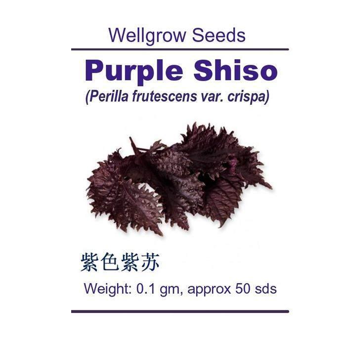WHT Wellgrow Seeds #23852324 Purple Shiso (50 SEEDS)