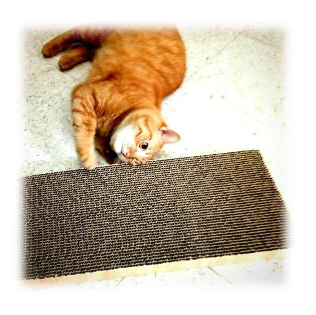 Cheap Budget Cat Scratcher Scratching Board By Neet Neko Pet Shop.