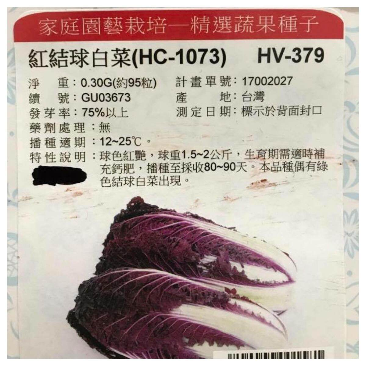 HV-379    Red Chinese Cabbage