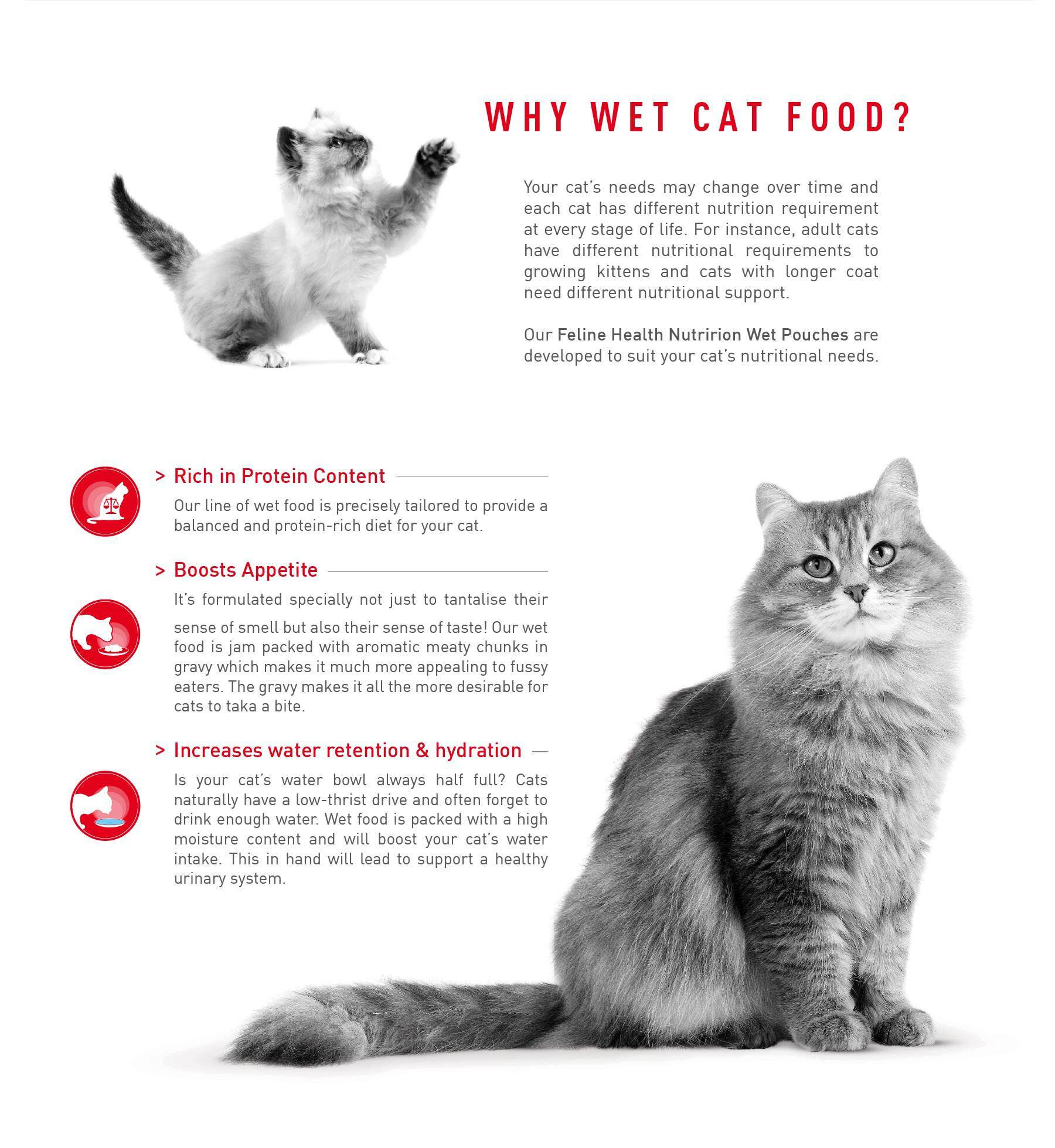 wet-launch-why-cat-food.jpg