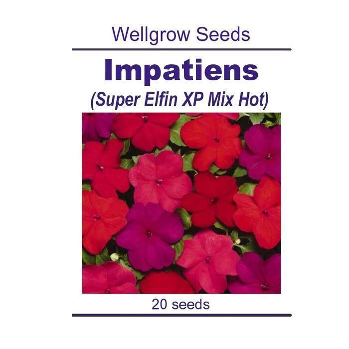 WHT Wellgrow Seeds #23852235 Impatiens Super Elfin XP Mix Hot (20 SEEDS)