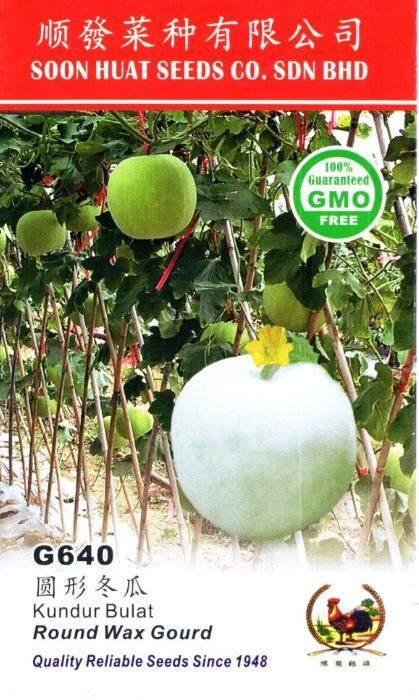 Benih Kundur Bulat G640 Round Wax Gourd seeds x50 Soon Huat Seeds