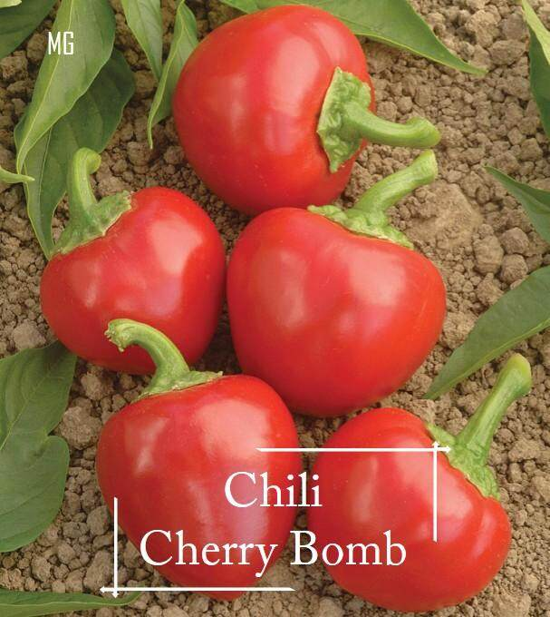 Cherry Bomb Chili Pepper seeds - 10 seed