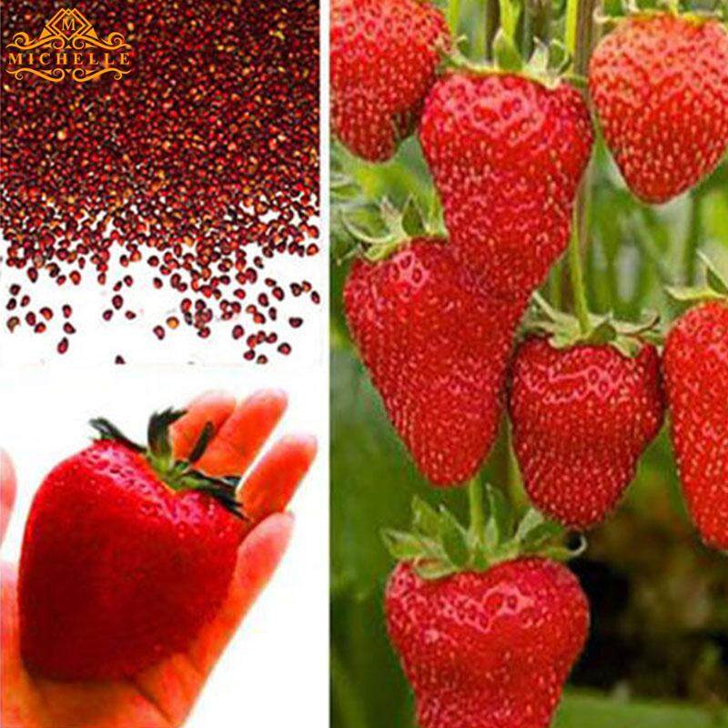 Strawberry Seeds 2107 Professional Red 100Pcs/Pack Garden Juicy Delicious