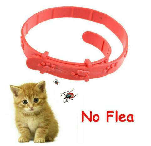 Adjustable Cat Kitten Flea Anti Mite Acari Tick Remedy Pet Collar Neck Strap (red) By Qaseh Zalinda Enterprise.