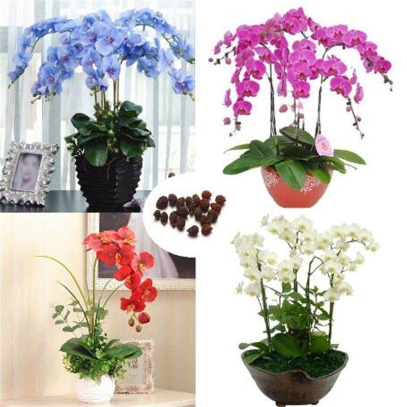 20 Pcs/Set Phalaenopsis Orchid Seeds Mixed 22 Types Balcony Garden Potted Bonsai Plants Flower Seed