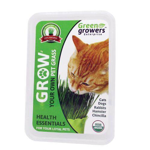 Green Growers Pet Grass - Self Grow Kit - Rumput Kucing By Green Growers Ent.