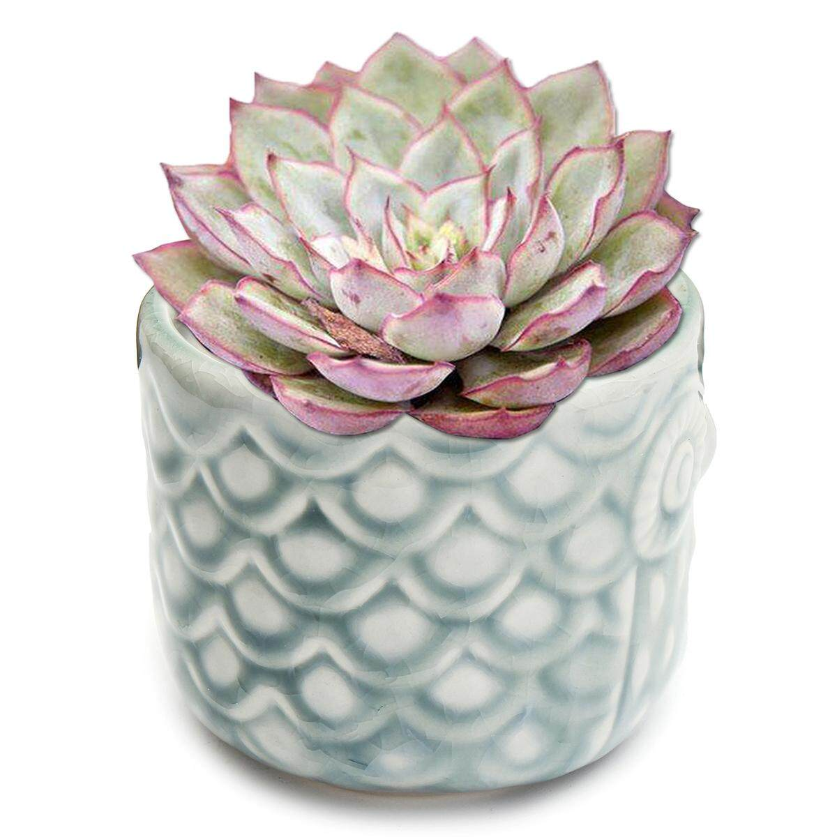 Ceramic Owl Pattern succulent Plant Pot/ Flower Pot Full Colors Set