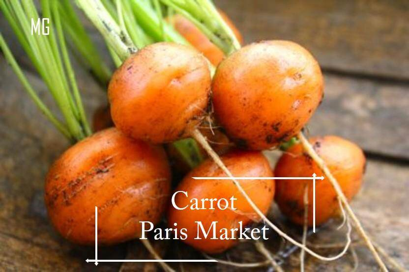 Carrot Paris Market Seeds - 50 seed