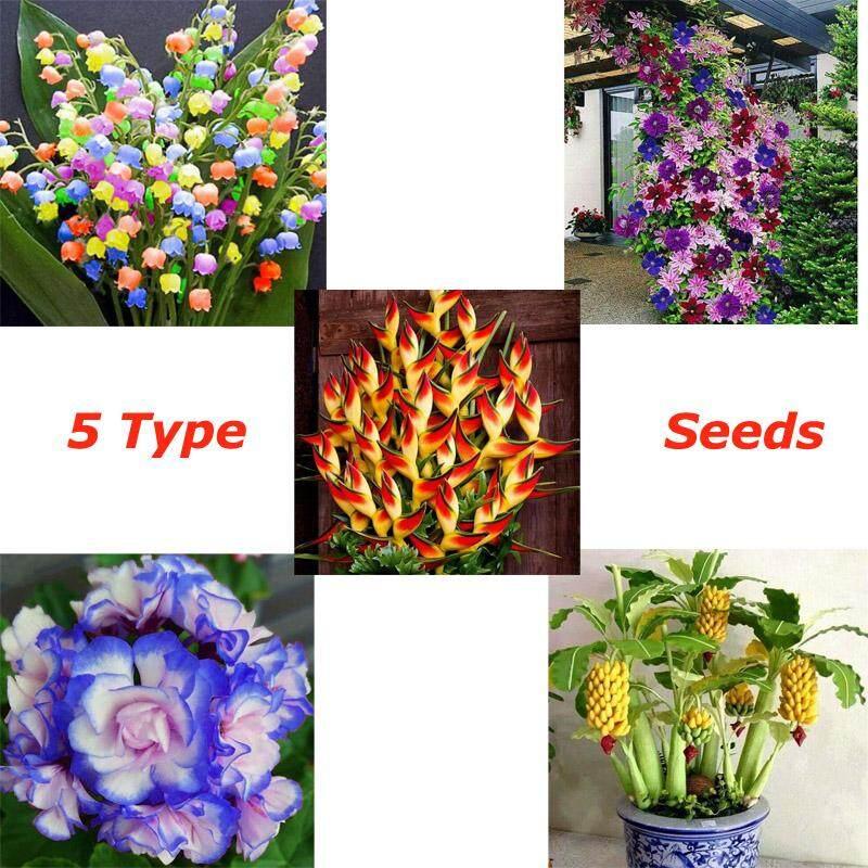 Buy Buy 1 Get 4 Free 5 Types Seeds New Rare Dwarf Banana Tree Seeds Mini Bonsai Fruit Exotic Home Garden Plants Malaysia