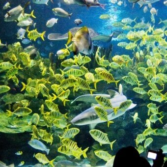 Kuala Lumpur: Aquaria KLCC Entrance Ticket (Malaysian - Adult)