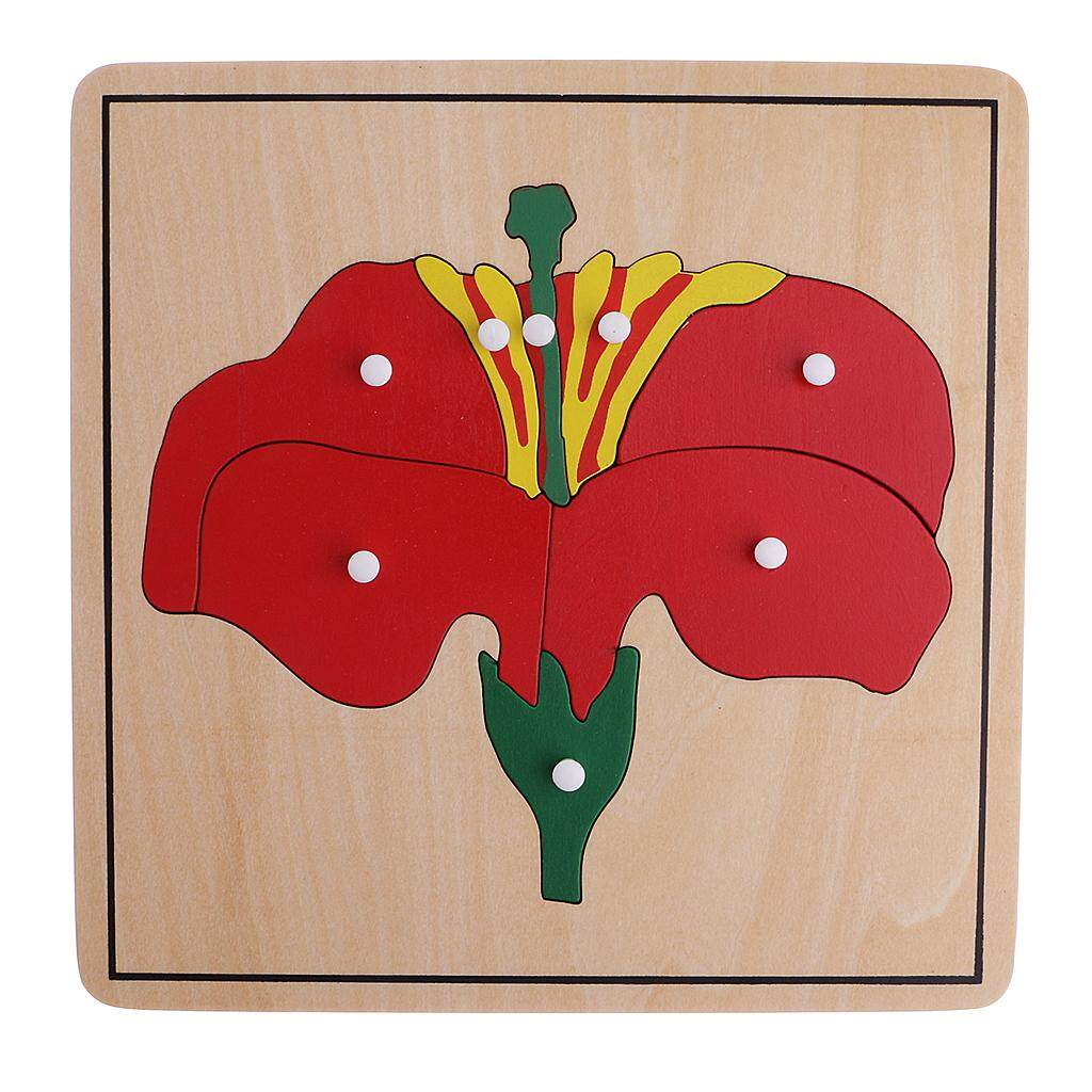 Montessori Zoology Botany Materials 8 Plywood Knob Puzzles Toy Gift for Kids