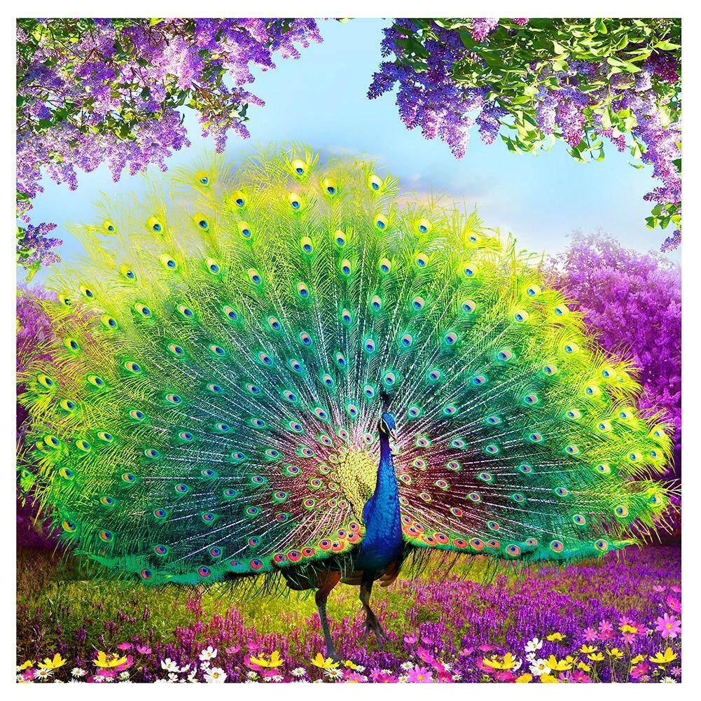 Download 53 Foto Gambar Burung Merak Poster HD Terbaru