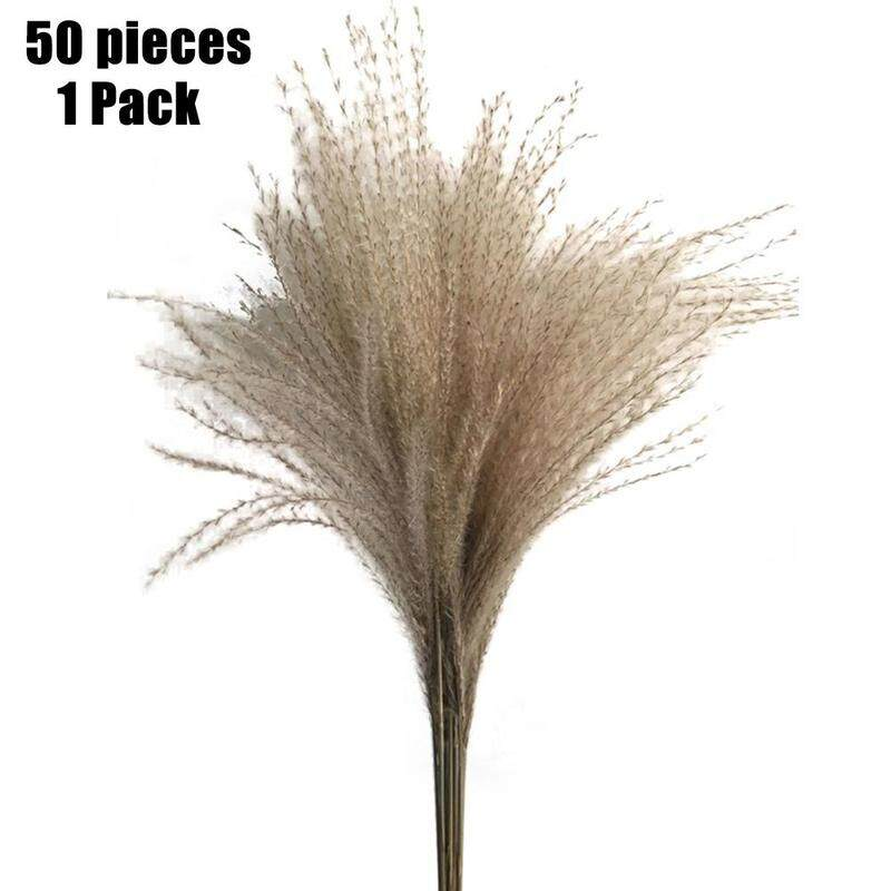 Phragmites Communis,Wedding Decorative,Dried Reed Bundle Bouquet Flower Arrangement Holiday Party Decor 100 PCS Natural Small Pampas Grass,Dried Reed Plumes