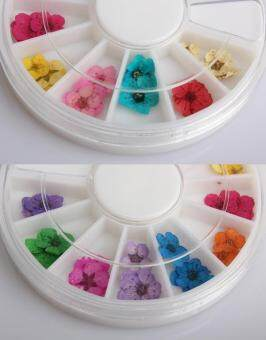 Harga 36pcs 12 Color Dried Dry Flower Nail Art Wheel Decoration anicure Tips