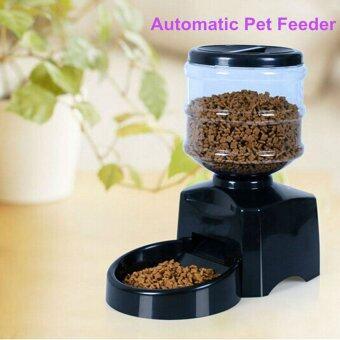 Automatic Cat Food Dispenser Diy