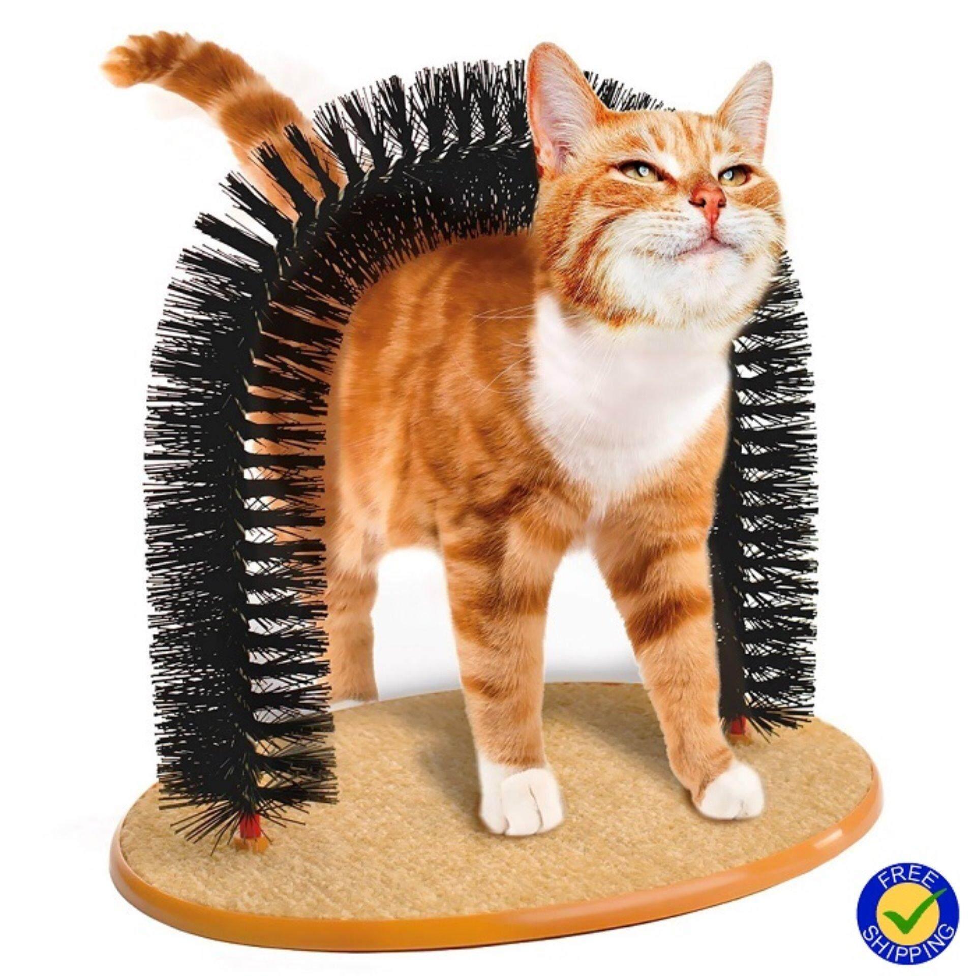 Cat Flea Habitat