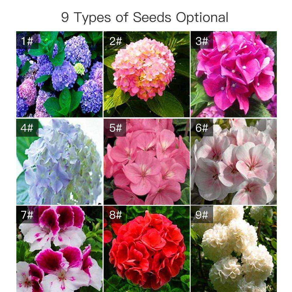 Geranium White Beautiful Fragrant Natural Garden Decoration Gift Seeds 20 PCS