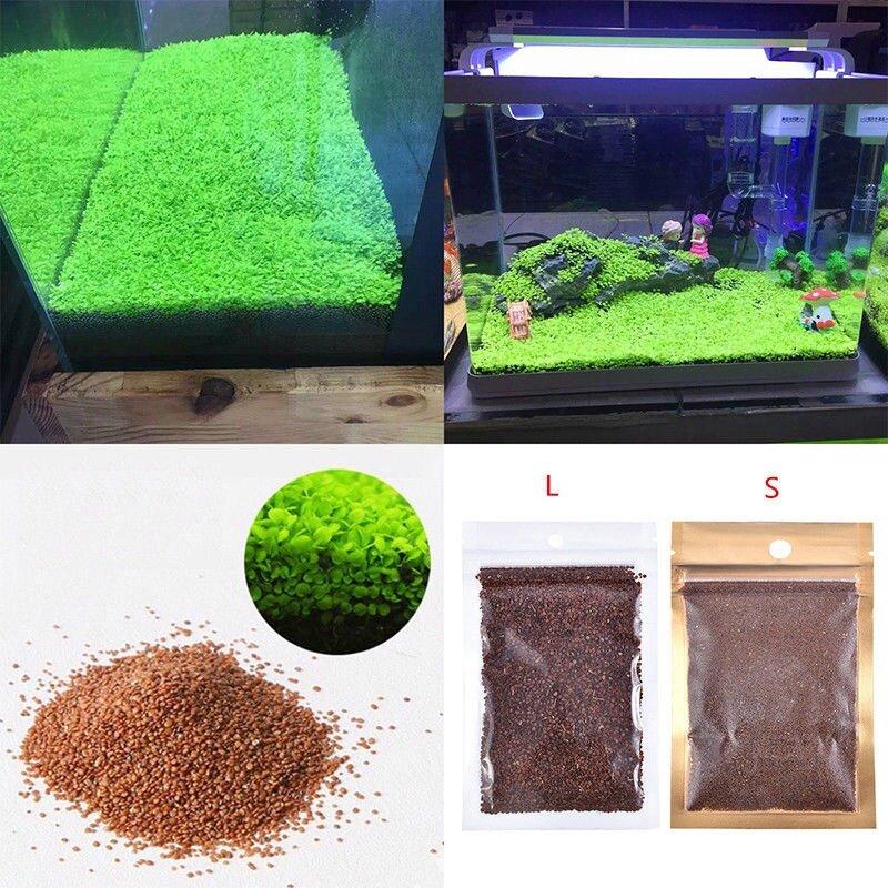 Aquarium Fish Tank Water Plants Grass Seed Decoration Landscape Ornament  (Big Leaf)